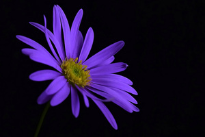 Purple Flower Blossom