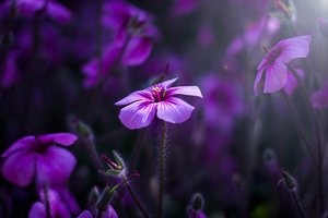 Purple Flowers Macro 4k