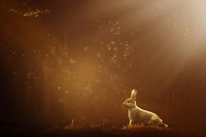Rabbit 12k