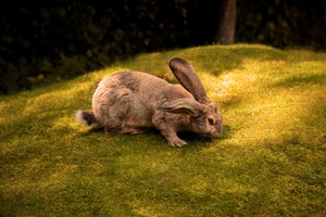 Rabbit 5k Wallpaper