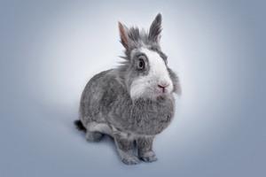 Rabbit Portrait 5k Wallpaper