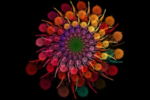Rainbow Flower Wallpaper