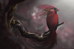 Red Bird Digital Art Wallpaper