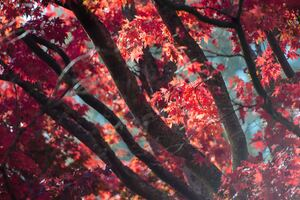 Red Fall Tree Autumn Leaves 5k