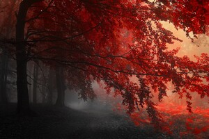 Red Forest Trees Path Wallpaper