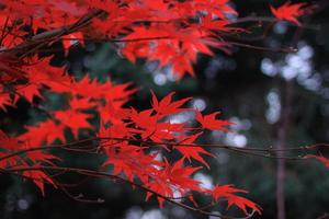 Red Leaves 5k Wallpaper