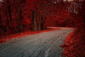 Red Leaves On Road Autumn Season Wallpaper