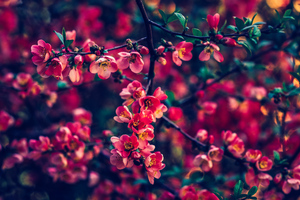 Red Pearls Flowers 4k