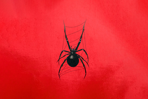 Red Spider 5k