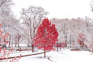 Red Winter Central Park 5k Wallpaper