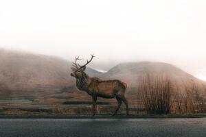 Reindeer 4k