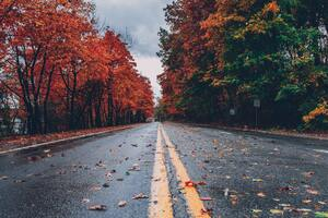 Road Between Autumn Trees 5k Wallpaper