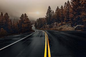 Road Between Woods