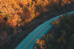 Road Fall Trees Nature 5k