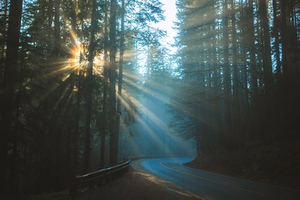 Road Sunbeams Between Trees 4k Wallpaper