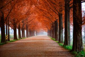 Roadway Surrounde By Trees 5k Wallpaper