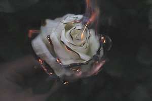 Rose Fire Photography Smoke Wallpaper