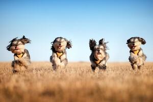Running Dogs Wallpaper