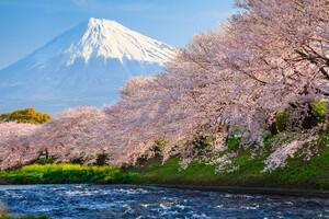Sakura River japan
