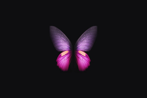 Samsung Galaxy Fold Butterfly Wallpaper