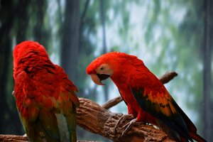 Scarlet Macaw 5k Wallpaper