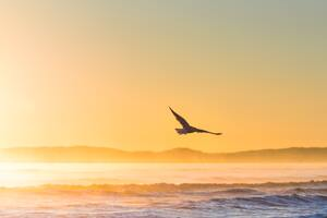Sea Gull Flying In Epic Sunshine 5k Wallpaper