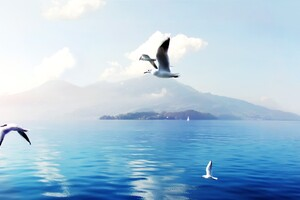 Seagulls In Switzerland Wallpaper
