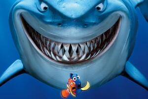 Shark Finding Nemo