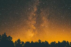 Silhouette Trees Under Starry Sky 5k Wallpaper