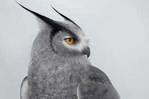 Silver Horned Owl Wallpaper
