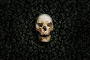 Skull Vampire Wallpaper