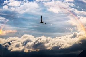 Sky Bird Rainbow 5k