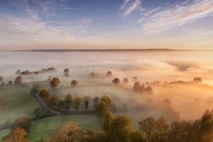 Sky Mist Forest Fall Trees