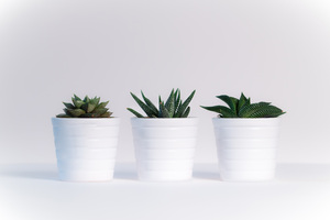 Small Plants In White Pots Wallpaper