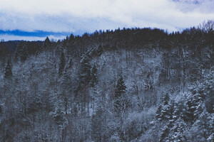 Snow Forest Nature 5k Wallpaper
