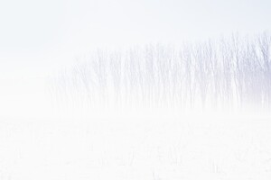 Snow Trees Abstract Wallpaper