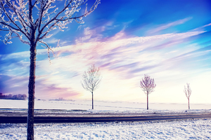 Snow Winter Trees Wallpaper
