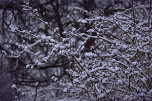 Snowy Branches 5k Wallpaper