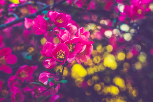Spring Flowers 5k Wallpaper
