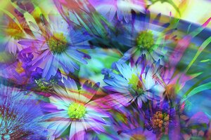 Spring Flowers Abstract