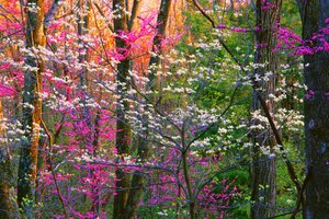 Spring Forest Trees