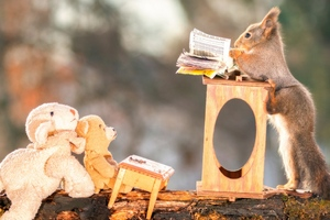 Squirrels Funny Wallpaper