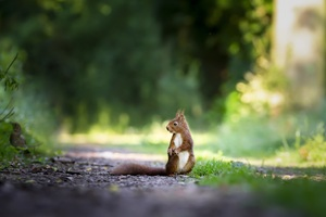 Squirrels Grass 5k Wallpaper