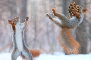 Squirrels Having Fun In Snow