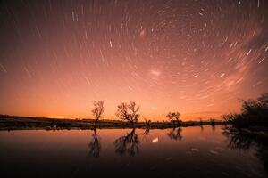 Startrail Longexposure Trees Cool Wallpaper