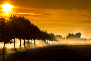 Sunbeam Fog Sunset Wallpaper