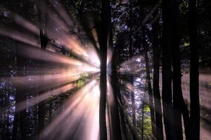 Sunbeam In Forest Wallpaper