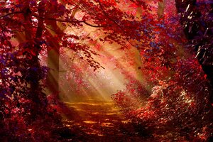Sunlight In Autumn Forest