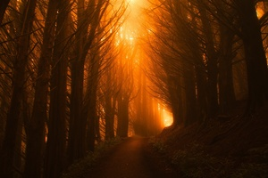 Sunlight Path Dark Beautiful Nature Trees Wallpaper