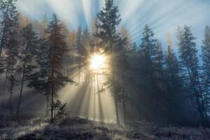 Sunlight Path In Snowy Trees